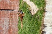 Bildergalerie:Tigerpark